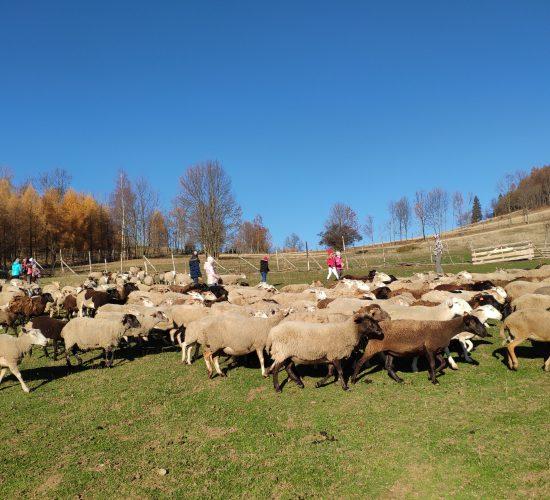Dobry Pasterz zna swoje owce